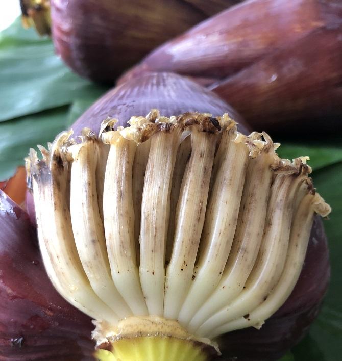 פרחי בננה