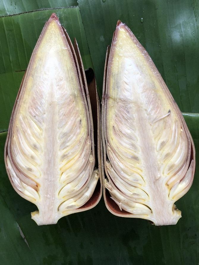 מתכונים מיוחדים עם פרחי בננה